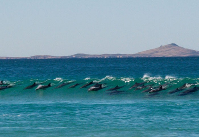 el-espiritu-del-surf-1